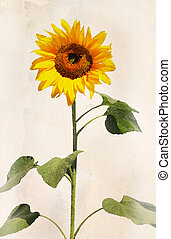 Watercolor sunflower - Beautiful sunflower. Artistic...