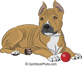 vector american staffordshire terrier - Puppy american...