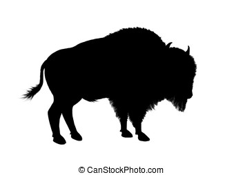 american bison - illustration, black silhouette of a north...