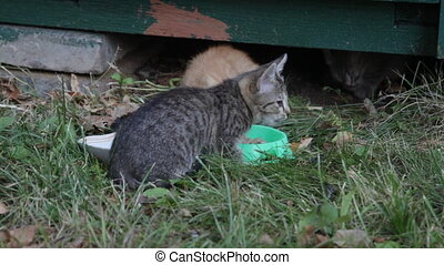 Street kittens eat a forage from the bowl standing on a grass