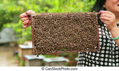 Holding honey beehive bare hand