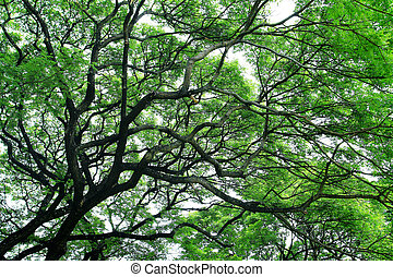 Big tree with green spring leaves
