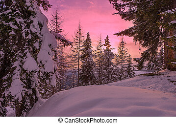 Lapland sunset - Snow trees during sunset in a ski resort...