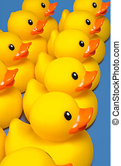 Ducks in a row - group on yellow rubber ducks on blue -...