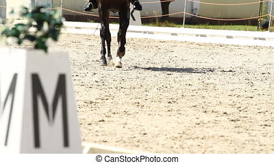 Horse Dressage Rings and rider