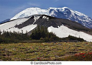 Mount Rainier Sunrise Wildflowers Snow