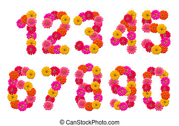 Numbers of  Zinnias flowers. A set