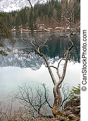 tree branch and the splendid lake of Fusine with clean water