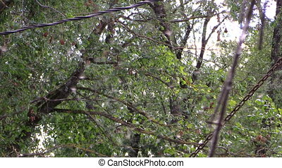 spider wer and trees - Tree branches grow in park and spider...