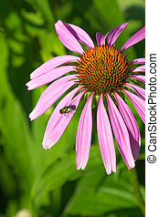 green fly on pink flower - green fly sits on a pink flower