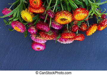 Bouquet of Everlasting flowers - Bouquet of multicolored...