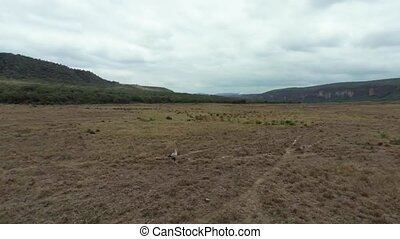 Savanna Africa Grasslands - Aerial Shots Over The Savanna Of...