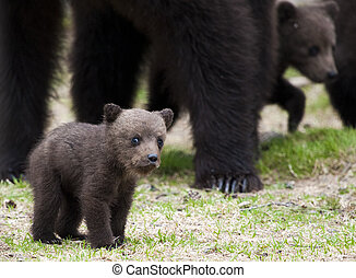 A small bear cub - The little bear cub with a lovely look.