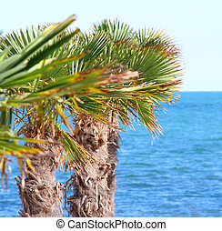 palm in the seaside tourist village