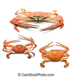 Steamed Blue Crab on white background