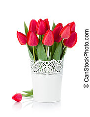 Red tulips in flowerpot. Isolated on white background