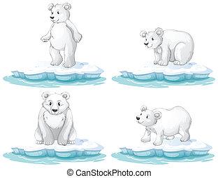 polar bear - Illustration of  a set of polar bear