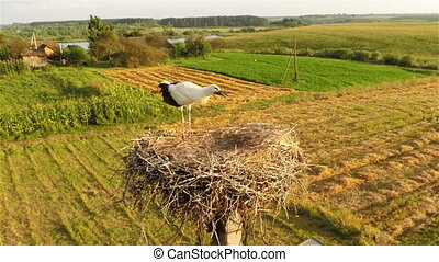 Young stork in nest - Aerial shot: fly over the nest stork...
