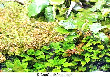 Aquarium (amazonian plant) and Terrarium