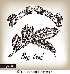 Kitchen herbs and spices. Bay Leaf hand drawn illustration...
