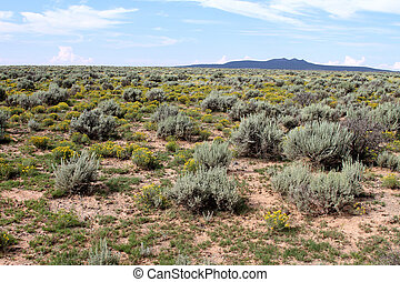 High Desert Sage Brush 2 - High desert sage brush view...