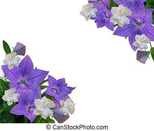 floral, frontera, púrpura, blanco, gardenias