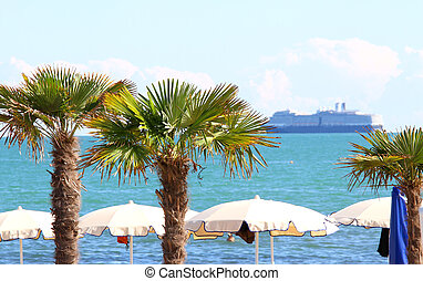 palm in the seaside tourist village and the cruise ship