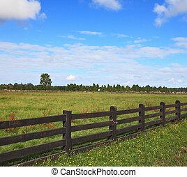 a, egyenlő, füves, farmer, mező
