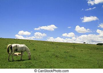 Wild horse grazing in green field near Salta, Argentina