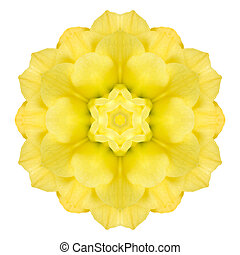 Yellow Concentric Rose Flower Isolated on White. Mandala...