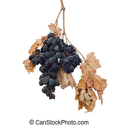 dry grapes with leaves isolated on white background