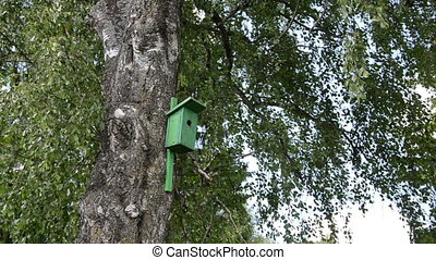 bird house birch tree - Green bird house nesting-box hang on...