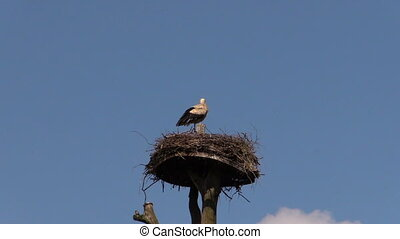 lonely stork bird - Lonely stork bird sit in the nest on...