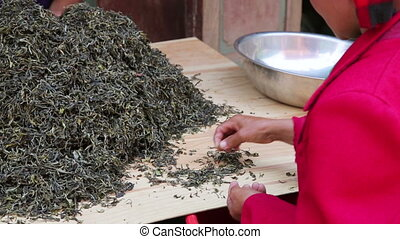 woman workers separating tea leaves from branches