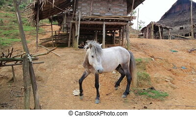 Horse at indigenous native tribal Akha tribe village,...