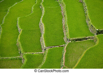 Banaue Rice Terraces , Philippines - The Banaue Rice...