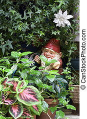 Garden Gnome - Garden gnome watering plants
