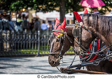 Horse Carriage waiting for tourists at the Old Square in...