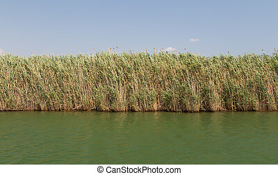 Reeds in Dalyan River, Koycegiz, Turkey