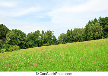 Green meadow with wild flowers and forest trees behind
