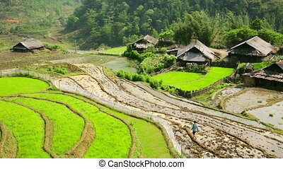 Akha villages in Sapa, Vietnam, Magnificent Rice Terrace