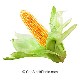 Corn isolated on a white background. Clipping Path