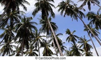Coconut Palm Trees against Blue Sky on the Beach. Speed up.