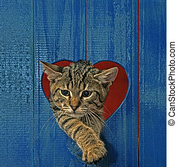 cat in heart hole - cat looking throw hole in heart shape