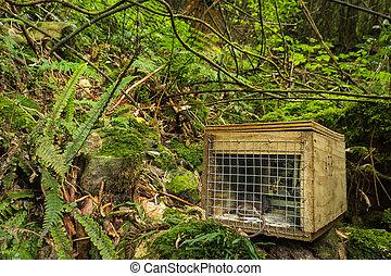 Native Bush Pest Control