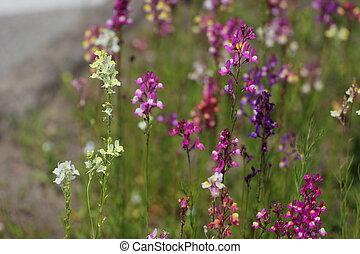 Colorful Fabaceae - A variety of colorful fabaceaelegume...
