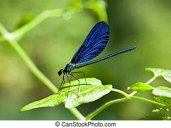 Damselfly on green plant with green background. - Blue...