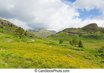 Langdale Pikes Lake District uk - Langdale Pikes Blea Tarn...