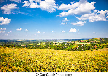 Panoramic view on a golden wheat field of Vojvodina ,...