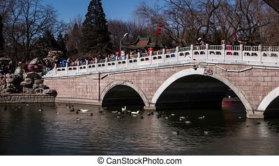 People watch the ducks and geese swim - People watch the...